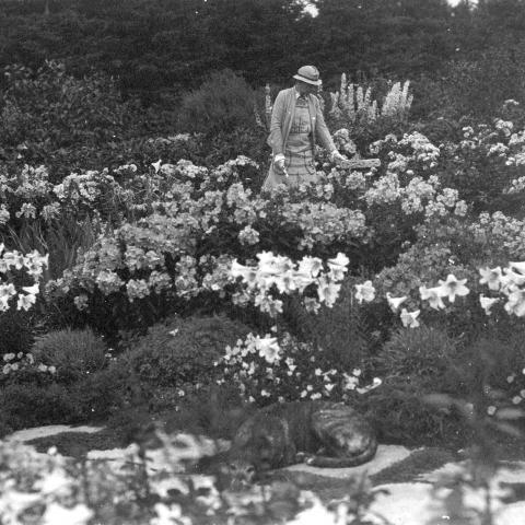 Une femme taille des plantes dans un jardin de fleur. Au premier plan, un chien dort sur une dalle de pierre.