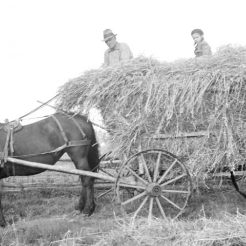 A man and a small boy sitting on a horse-drawn wagon piled with hay.